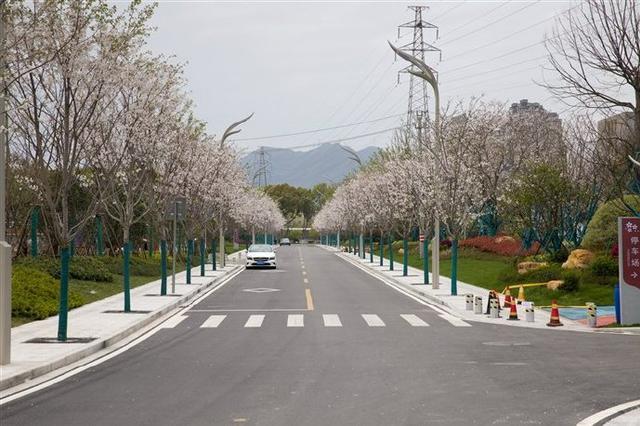 奉化樱花公园开园后首次绽放 此园樱花始盛开