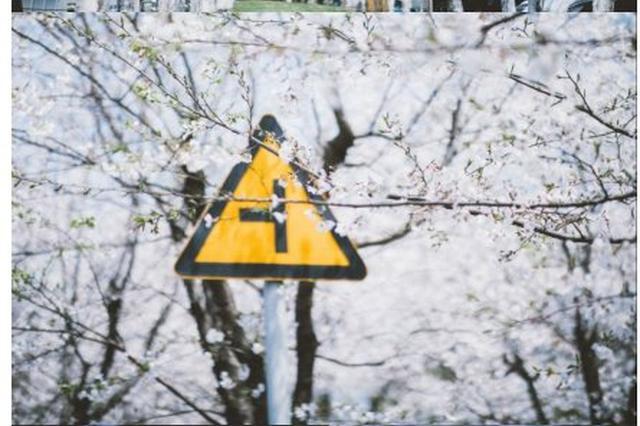 宁波的五彩春天 春雨润物春花绽放感受美好春日