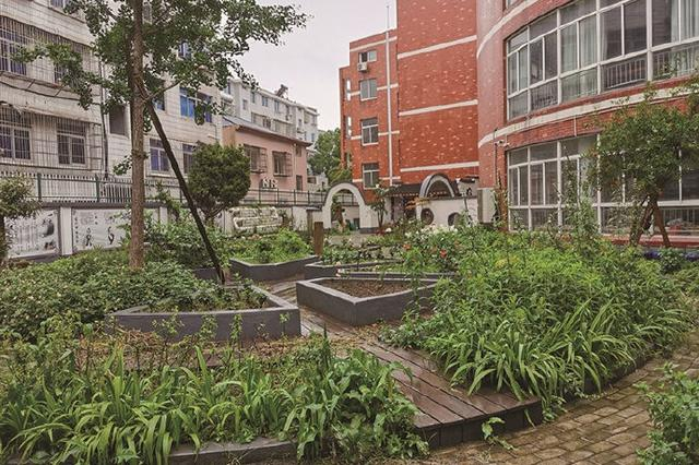 象山石浦镇新港小学打造中草药园 建设特色校本课程