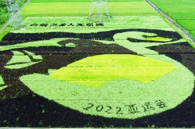象山农场彩色稻田绘丰收 并体现迎2022亚运会主题