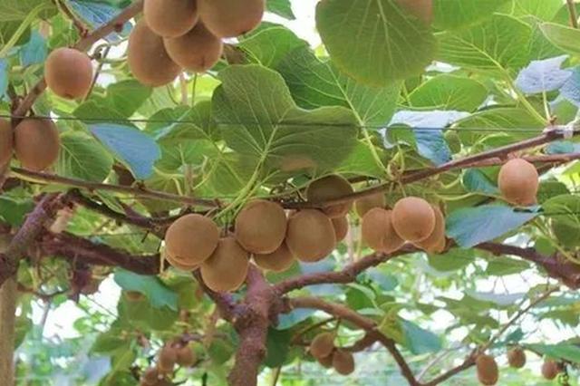 余姚马渚镇发展农业特色产业 进一步推动了乡村振兴