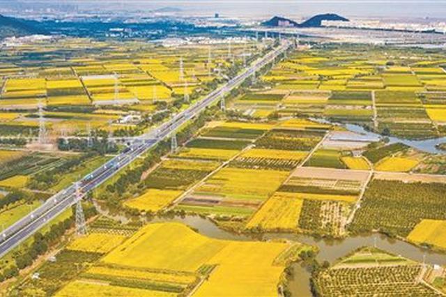 宁波公路旁种植鲜花与晚稻 绘就一幅丰收的晒秋图
