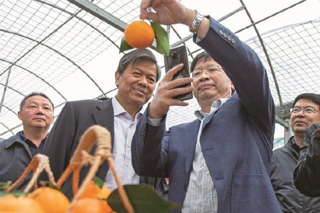 邓秀新院士把脉象山柑橘产业 扩大象山柑橘影响力
