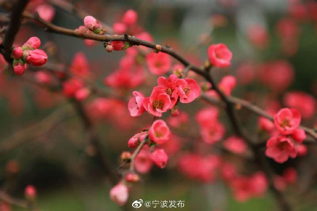 宁波市今天入春 预计连续五天日平均气温将高于10℃