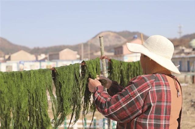 奉化村民将海苔铺开晾晒 制作变成餐桌上的美味苔条