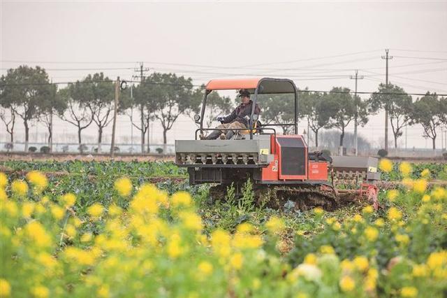 象山汤岙村家庭农场机器轰鸣 农场员工正在翻土作业