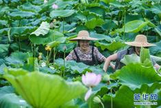 """浙江湖州:美丽""""荷花池""""助力乡村旅游"""