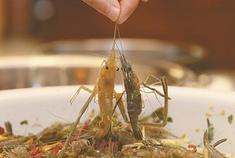 醉虾:江浙一带传统名菜