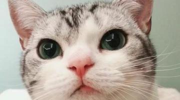 25岁慈溪姑娘养的一只猫成了网红