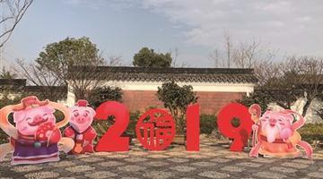 宁波植物园花团锦簇迎新年