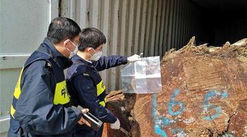 宁波海关截获活体有害生物