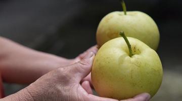奉化莼湖农家一果树结出五种梨
