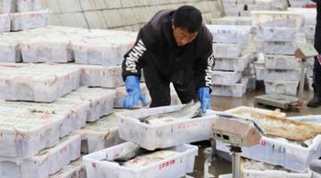 奉化春节后第一网海鲜到港