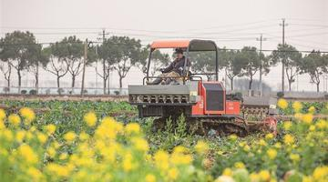 象山汤岙村家庭农场机器轰鸣