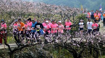 奉化海峡两岸桃花马拉松赛即将开跑