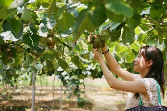 象山1个橘子卖上百元 浙江农产品内外结合迎发展春天