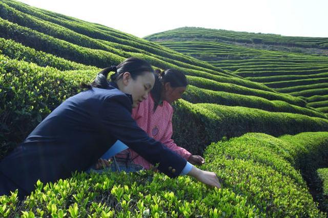 2017年度宁波口岸出口茶叶超4700吨