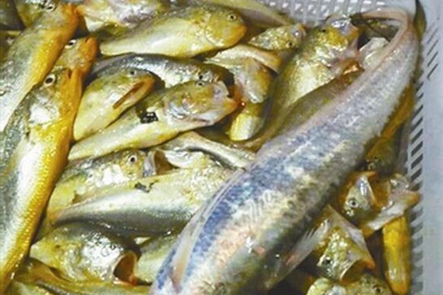 节后新鲜鱼虾开始陆续到港 供应宁波市场