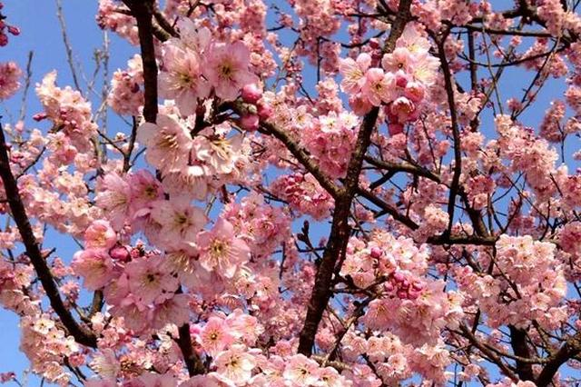 春天宁波最全的赏花清单出炉 来场说走就走的赏花行