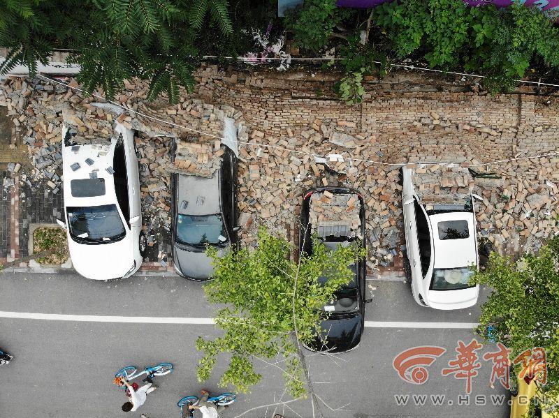 起底城市绿化中的奢靡之风:贫困县斥资200多万种银杏