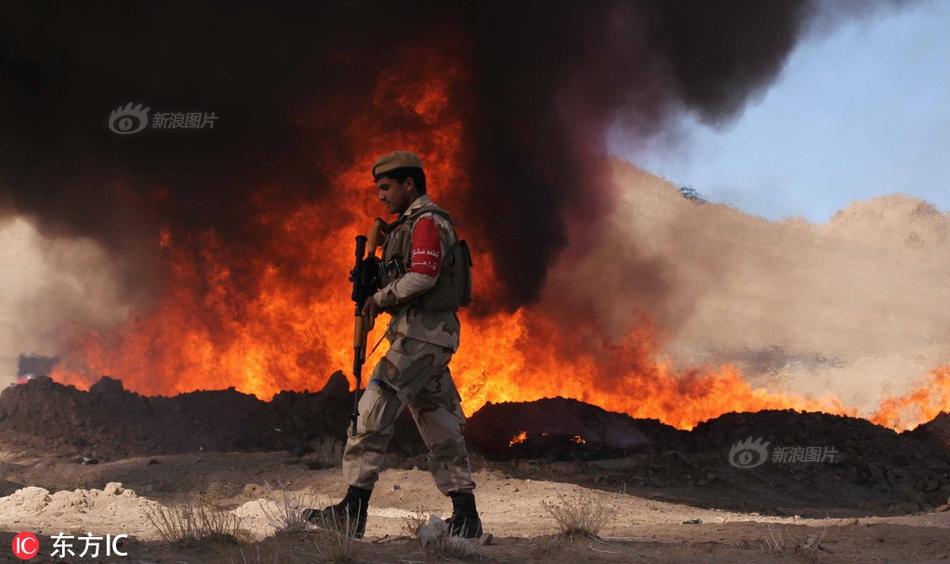 触目惊心!澳大利亚超2万只考拉山火中死亡