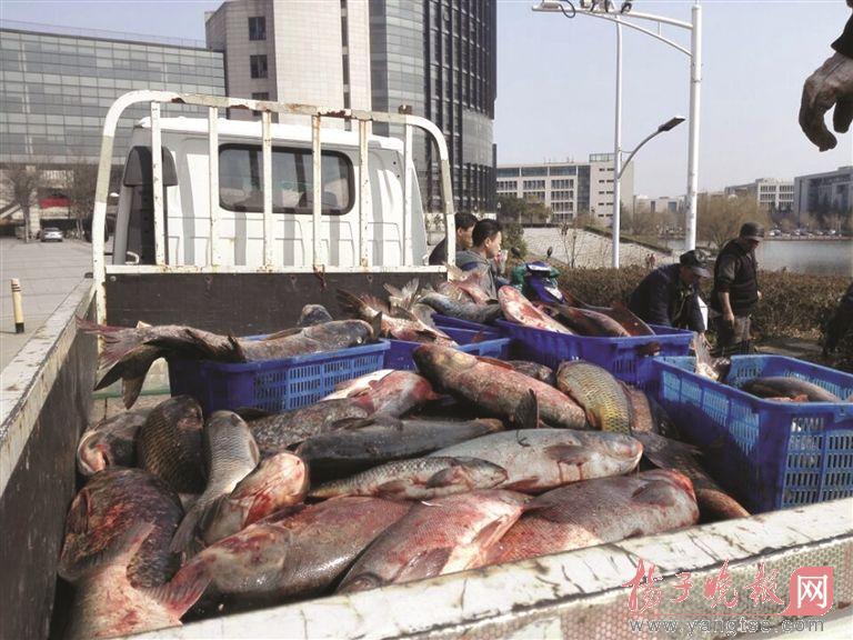 捞出1000公斤大鱼 矿大请万名师生免费吃