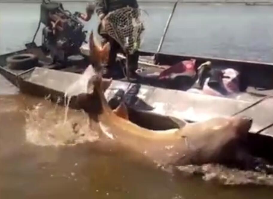 印度男子不慎坠湖身亡,岸边数百人围观拍摄,无人施救