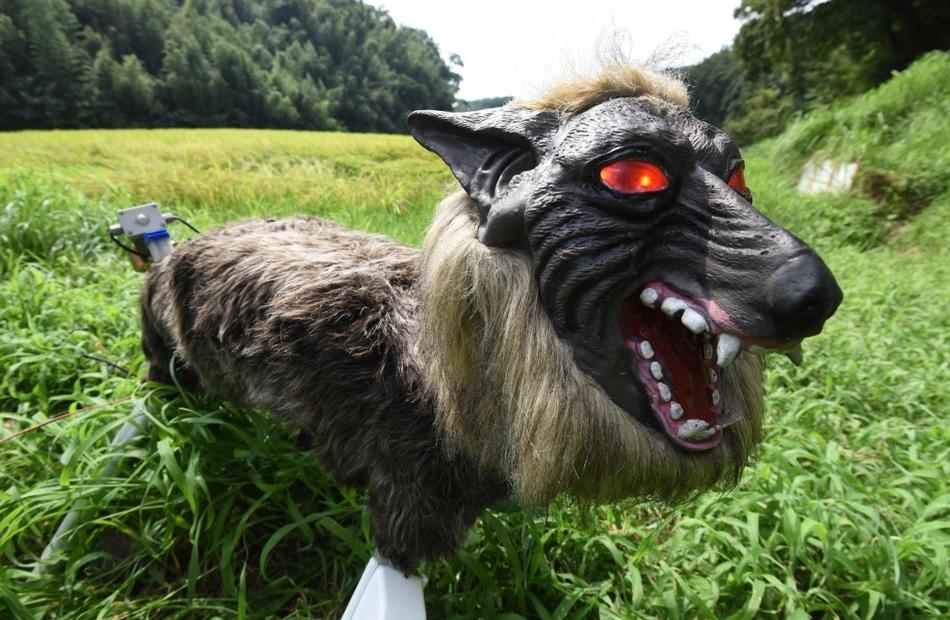 日本 超级怪兽狼 机器人稻田边守护庄稼