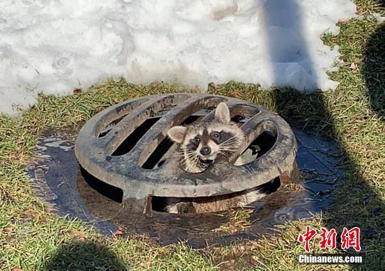 江苏三名游客偷挖六根春笋带回老家 被拘留