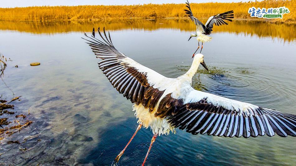 天津湿地 鸟类天堂