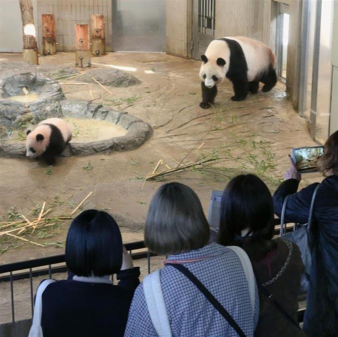 パンダ 日本 動物園