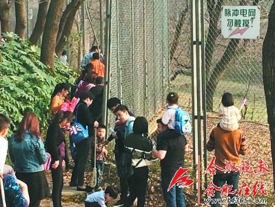 动物园游客无视电网近距离观虎