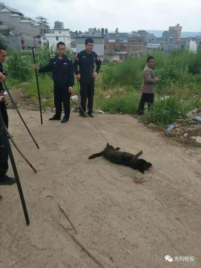 恶狗狂咬8人 警察用棍将其打死