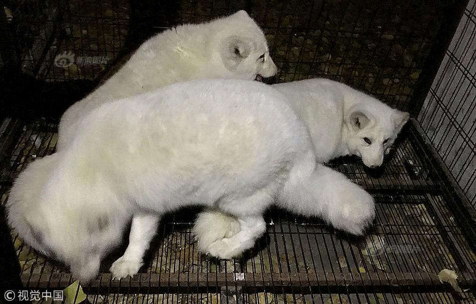 合肥野生动物园春节温馨提示:免费游园需提前预约