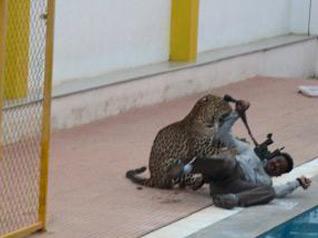 印度一私立学校遭野生豹子袭击