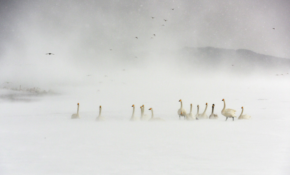 【爱拍】冬日印象