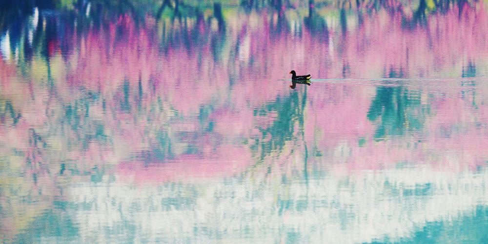 【爱拍】30幅入展作品带你回味春天