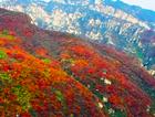 航拍幽岚山红叶区