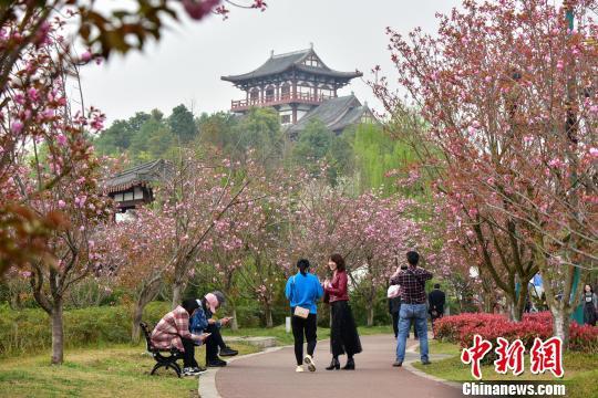 材料图:游者在赐予花游憩。青白江区委宣传部供图