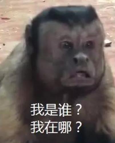 猴子长人脸 未命名 热图2