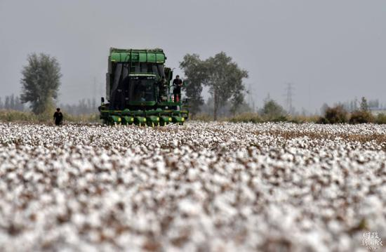 △新疆库尔勒市普惠农场内,大型采棉机正在采收棉花。