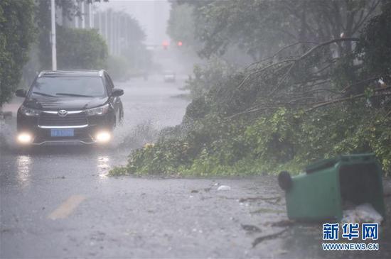 """7月11日,在福州市仓山区建新中路,车辆从被大风吹倒的树木和垃圾桶旁驶过。当日上午,今年第8号台风""""玛莉亚""""在福建连江沿海登陆。风雨给福州市区带来影响,造成部分电力设施和交通设施受损,一些路段树木倒伏。新华社记者 宋为伟 摄"""