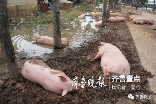 图片来源:齐鲁晚报