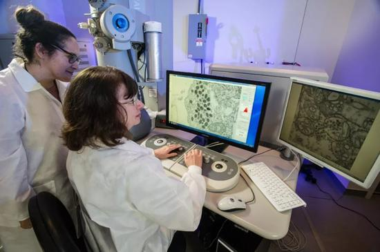 辛西婭·戈德史密斯正在處理病毒圖片。/CDC