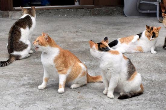 """""""猫岛""""上的猫咪们(每日新闻)"""