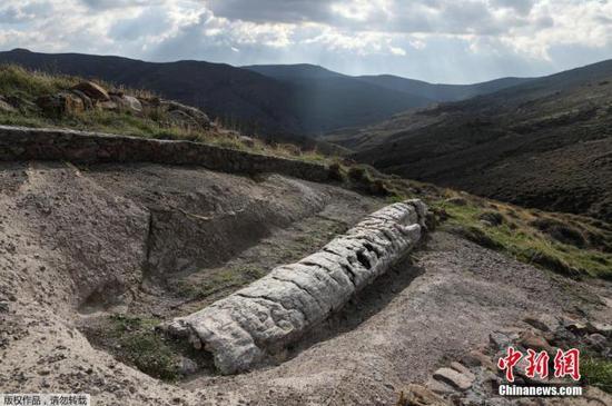 罕见!希腊发现2000万年前化石树 树枝保存完整(图)