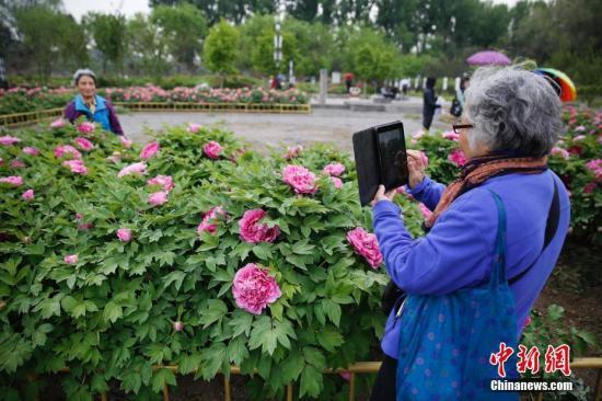 北京今日白天最高气温11℃ 阵风达七级