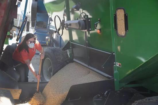 多元化处理大豆刚需