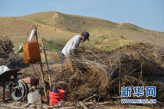 在内蒙古鄂尔多斯市杭锦旗,工人为新修的穿沙公路制作沙障(7月26日摄)。新华社记者 邹予 摄