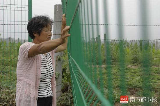 """2018年7月11日,西小庄村民彩德凤站在围栏外遥望土地。西小庄村涉事的250亩土地被第三方""""文森公司""""装了围栏,禁止当地村民进入土地耕种。"""